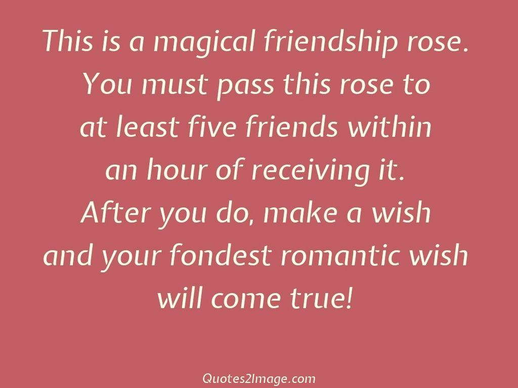 This is a magical friendship rose