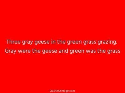 funnyquotegraygeesegreen
