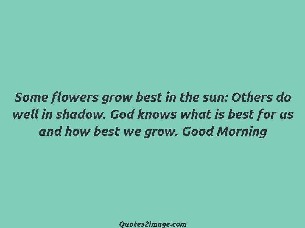 Some flowers grow best