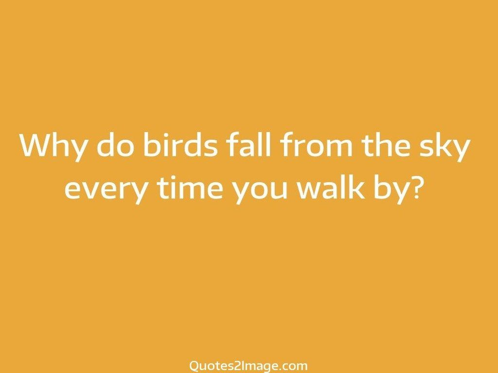 Why do birds fall