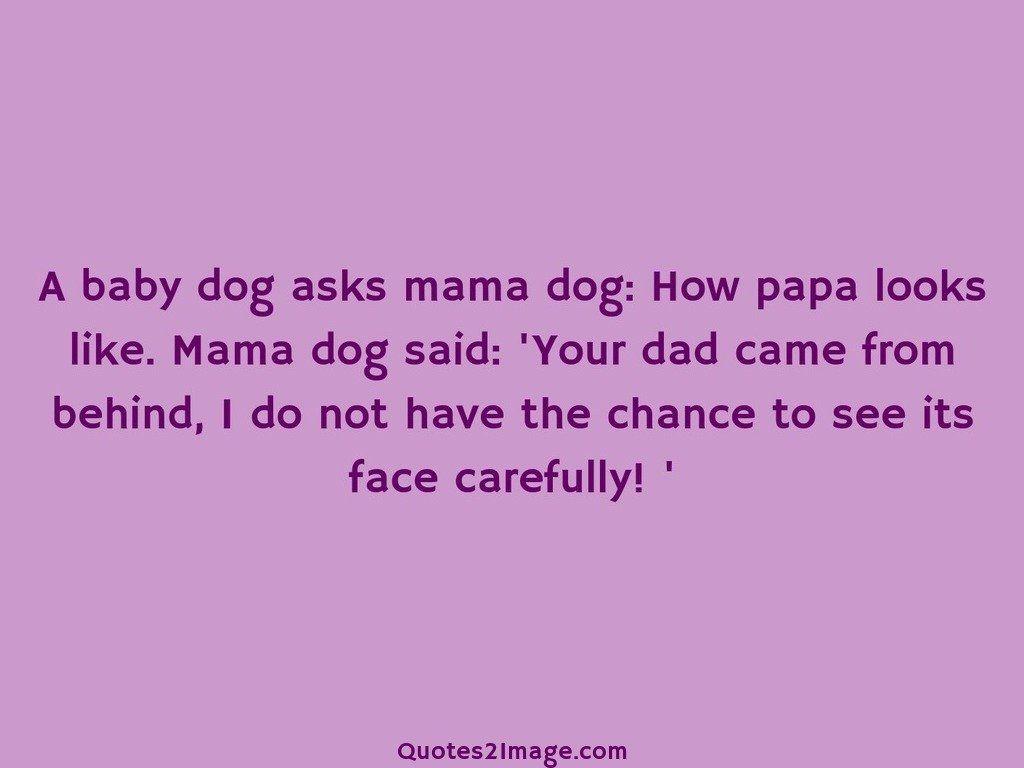 A baby dog asks