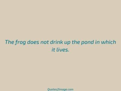 wise-quote-frog-drink-pond